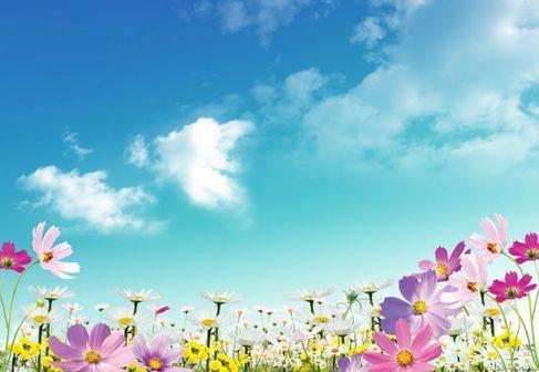 Beautiful flowers material HD Photo 02.jpg