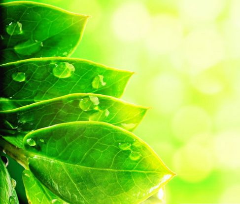 Beautiful green natural HD Photo 05.jpg