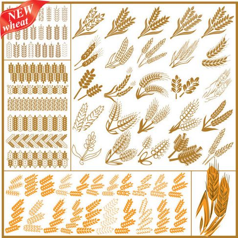 Wheat Pattern Vector 04.jpg