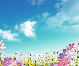 Beautiful flowers material HD Photo 02