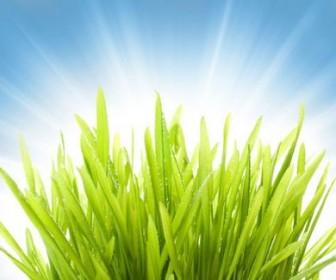 Beautiful green natural HD Photo 02