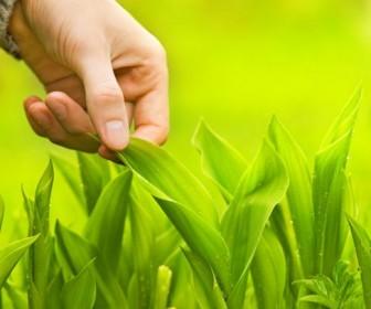 Beautiful green natural HD Photo 03