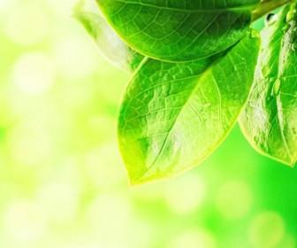 Beautiful green natural HD Photo 04
