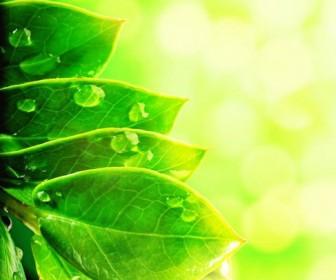 Beautiful green natural HD Photo 05