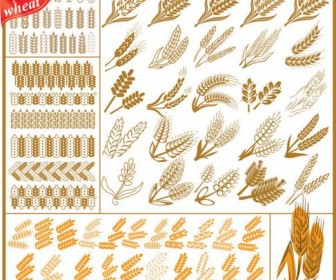 Wheat Pattern Vector 04